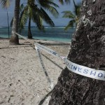 Custom-length-slackline-slacklineshop-co-nz-beach-tree-palmtree